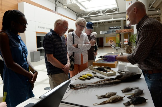 """Garth Spellman, curator of ornithology, right, hosts  visitors at the Denver Museum of Nature & Science's """"Science on the Spot"""" exhibit, showing animals in the museum's collection that are great examples of mimicry Aug. 30, 2017."""