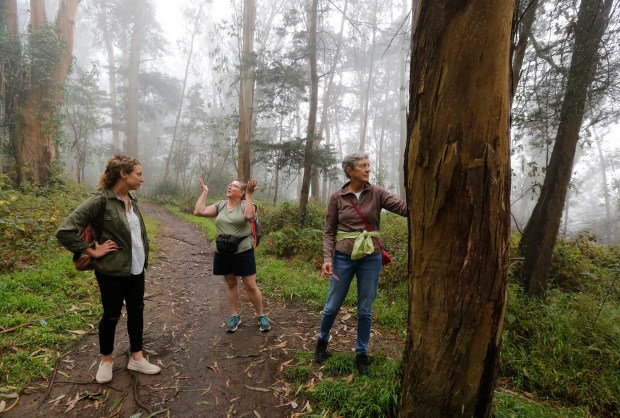 """Host Julie Plevin, left, and participants Yvonne Scharf from San Diego and Heather Bailey from Vermont pause on a trail during a """"forest bathing"""" excursion on Mt. Sutro in San Francisco, Calif., on Friday, Sept. 8, 2017. Participants were able to sign up for the """"Urban Forest Walkabout"""" through Airbnb's new """"experiences"""" feature."""