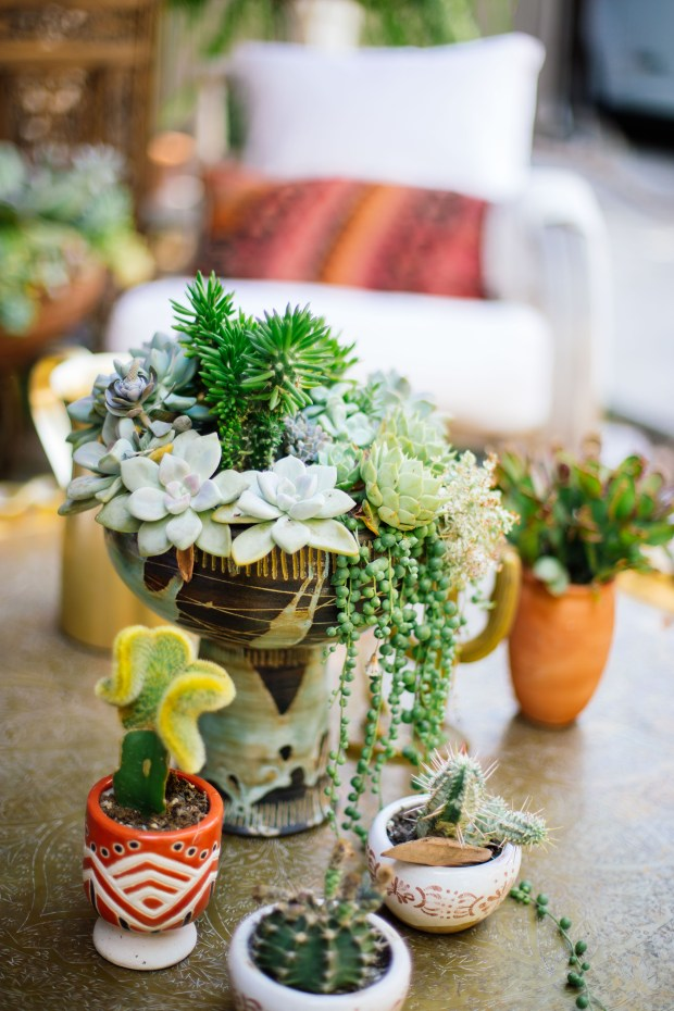 """If a plant in your home isn't happy, """"do some research, find a good spot and let the plant live there for a couple of months and acclimate,"""" says designer Justina Blakeney."""