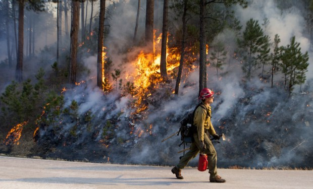 A firefighter walks by flames of the burn out fire that was set set while battling a blaze in Custer State Park, Tuesday, Dec. 12, 2017.  High wind gusts are making it more difficult for firefighters to battle the blaze at the park in the Black Hills of South Dakota.