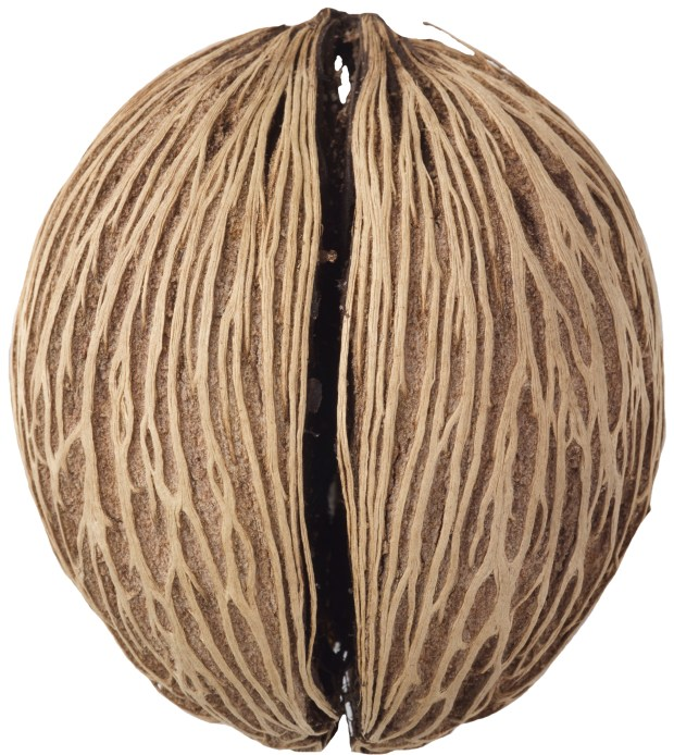 A photo of a tree seed