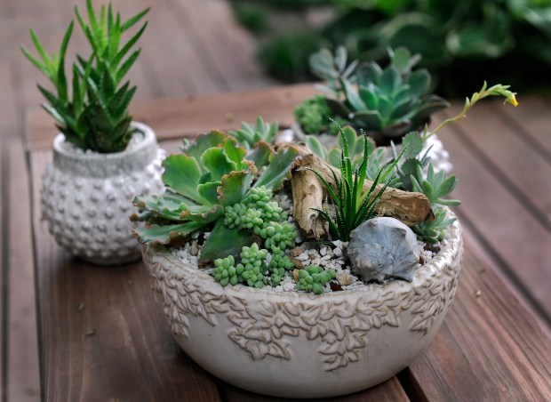 Succulents are practically perfect, looking great in garden