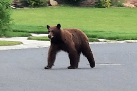 couple punches hits bear