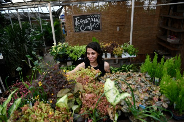Paulino Gardens Closure This Summer Was A Sign Of The Times In Denver S Shifting Garden Center Industry The Denver Post