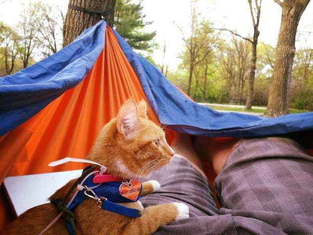 Maya the cat sits in a hammock with her dad, Richard Auchus.