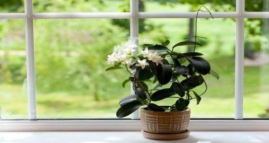 planta dormir depa de soltera