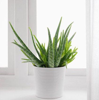 depa de soltera plantas dormir