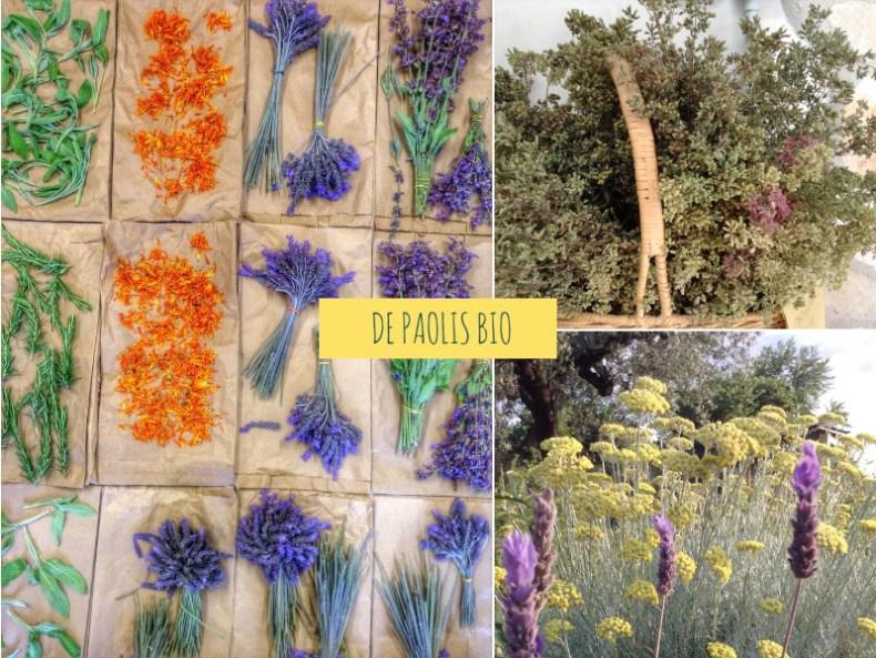 prodotti biologici de paolis erbe aromatiche