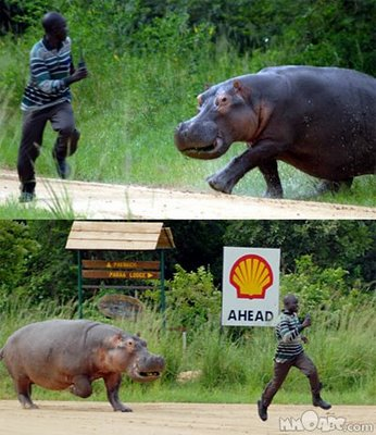 hippo chase
