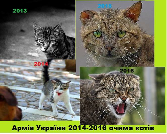 Cats in ATO: the best for 2016 - Photo 39