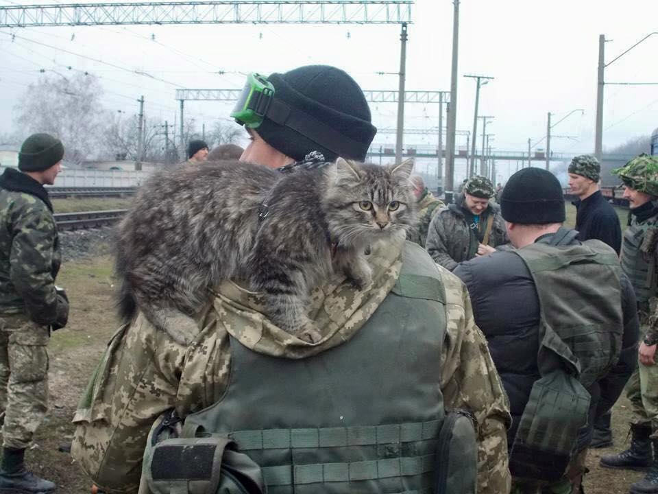 Cats in ATO: the best for 2016 - Photo 2