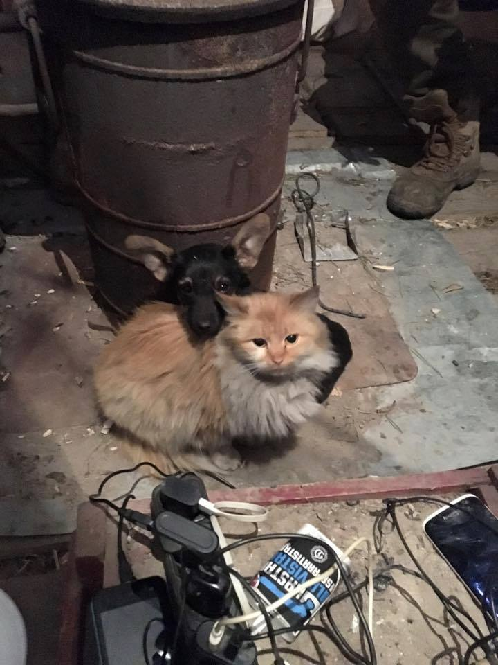 Cats in ATO: the best for 2016 - Photo 23