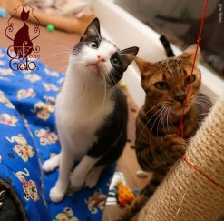 Foto: Cafe com Gato