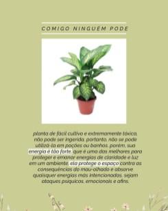 plantinhas-boas-energias-para-o-quarto (2)