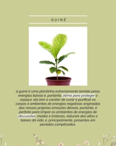 plantinhas-boas-energias-para-o-quarto (5)