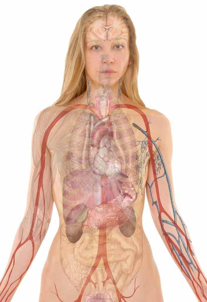 usos del colágeno para el cuidado del organismo