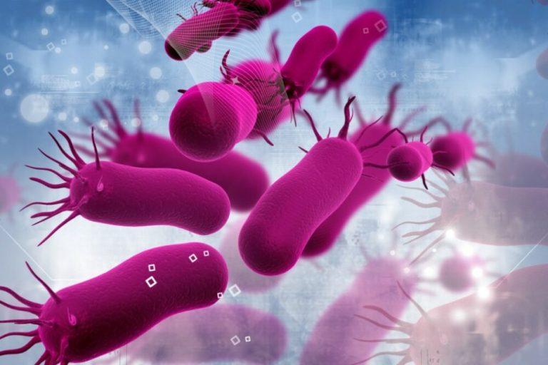 Bacterias resistentes