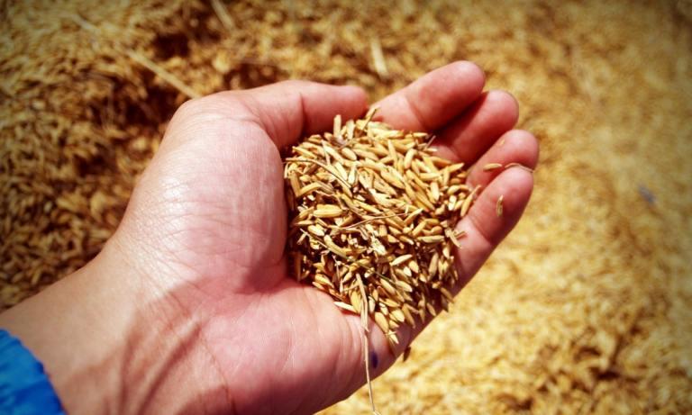 Es mejor el arroz integral que el arroz blanco porque tiene más nutrientes