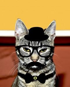 cat-1474092_640
