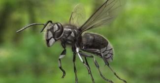 bald-faced-hornet