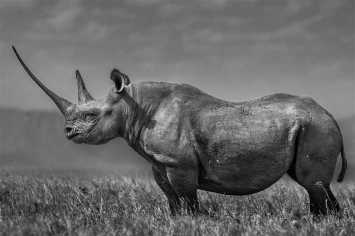 rhino-longest-gestation-period