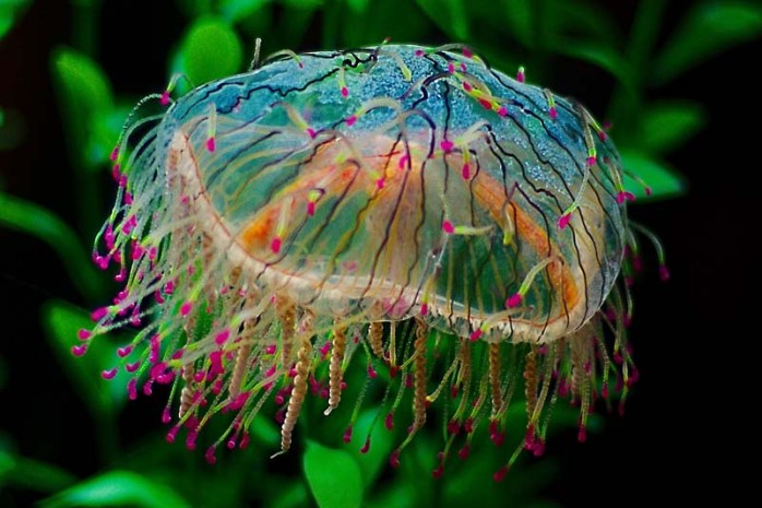 flower-hat-jelly