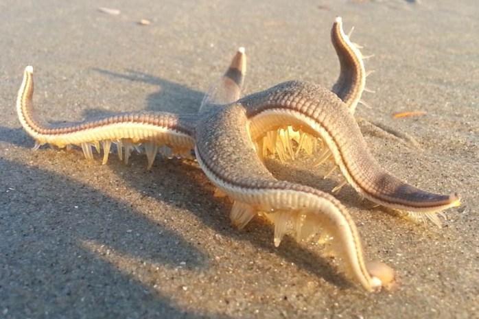 Top 10 Colorful Ocean Creatures Depth World