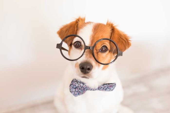dogs-are-smarter