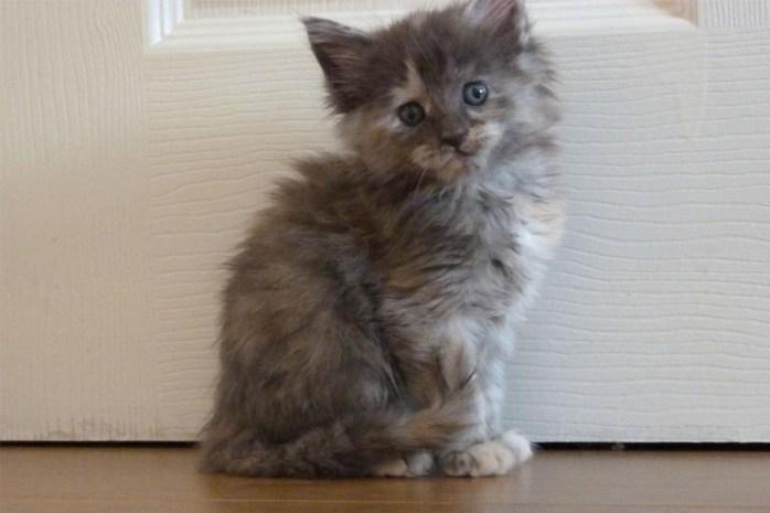 wigan-forest-cat