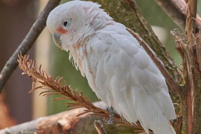 kalangay-white-bird