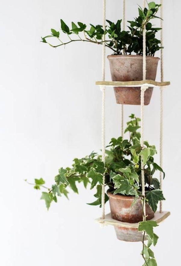 3 Plantas Colgantes De Interior Y Donde Encontrarlas Depto51 Blog - Plantas-colgantes-de-interior