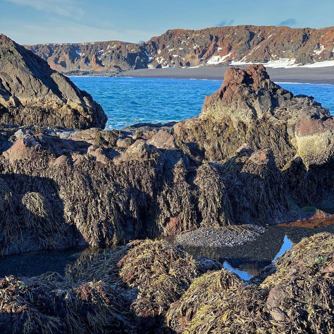 Rocas con algas en Djúpalónssandur