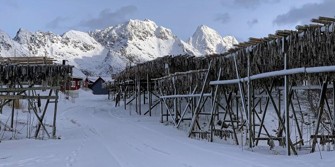 Secaderos de bacalao al sur de Henningsvær