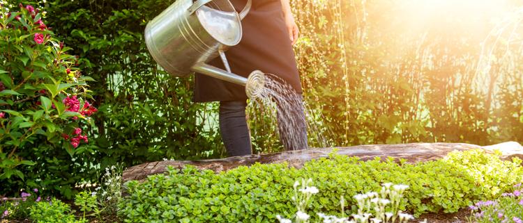 consumo d'acqua per innaffiare il giardino
