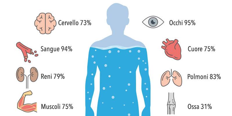 percentuale di acqua che contengono le componenti del nostro corpo
