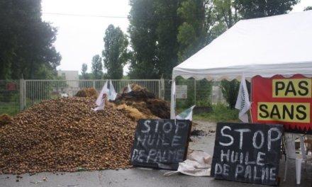 Huile de palme: Total et le Gouvernement français désavoués!