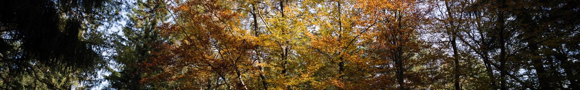 Fotodings – In den Thüringer Wald geguckt