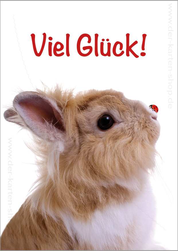 Postkarte Grukarte ses Kaninchen mit Marienkfer Viel