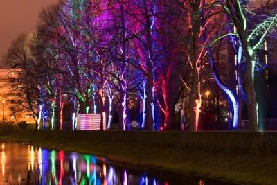Niklas farbig angestrahlte Bäume