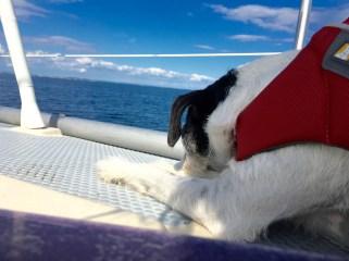Blick auf die Südsee