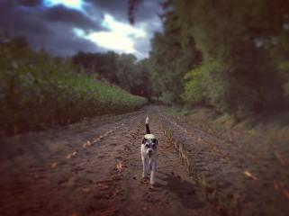 Mein Hund, ein Freund auf Zeit