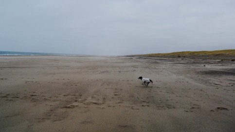 Positive Energie - Strandspaziergang mit Hund