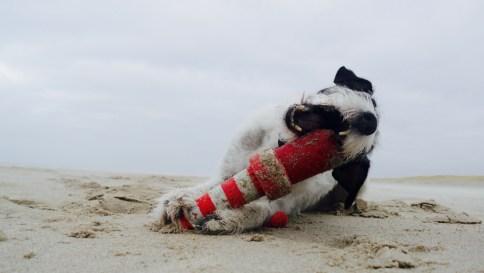 Strandräuberin Frida