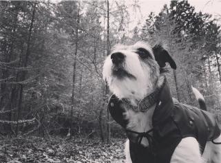 Die Nase im Wind oder im Wald.