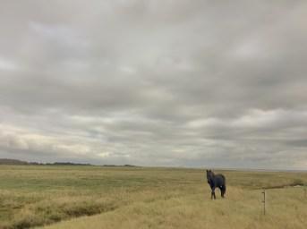 Überall Pferde - Ein Traum