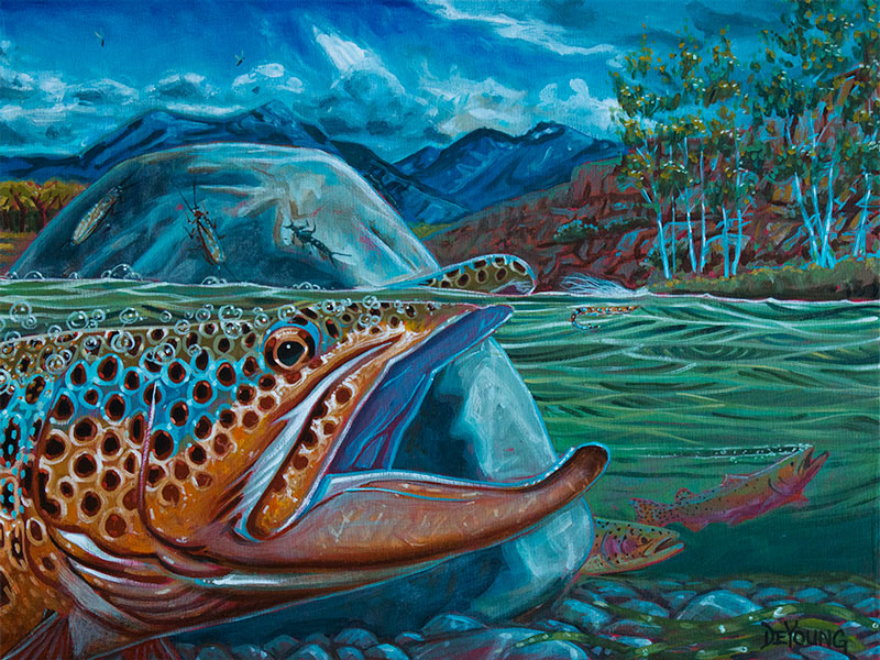 Fall In The Mountains Wallpaper Brown Trout Derek Deyoung