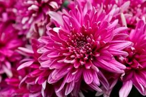 flowerdome-23