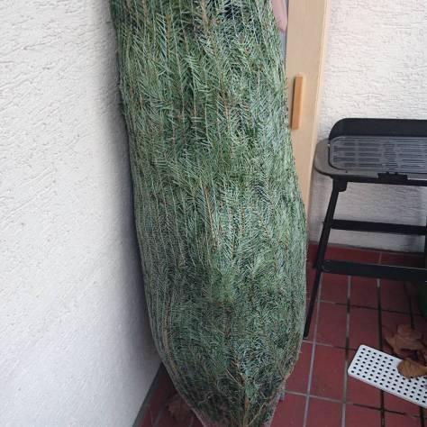 Weihnachten kann kommen der Baum ist schon da #2016
