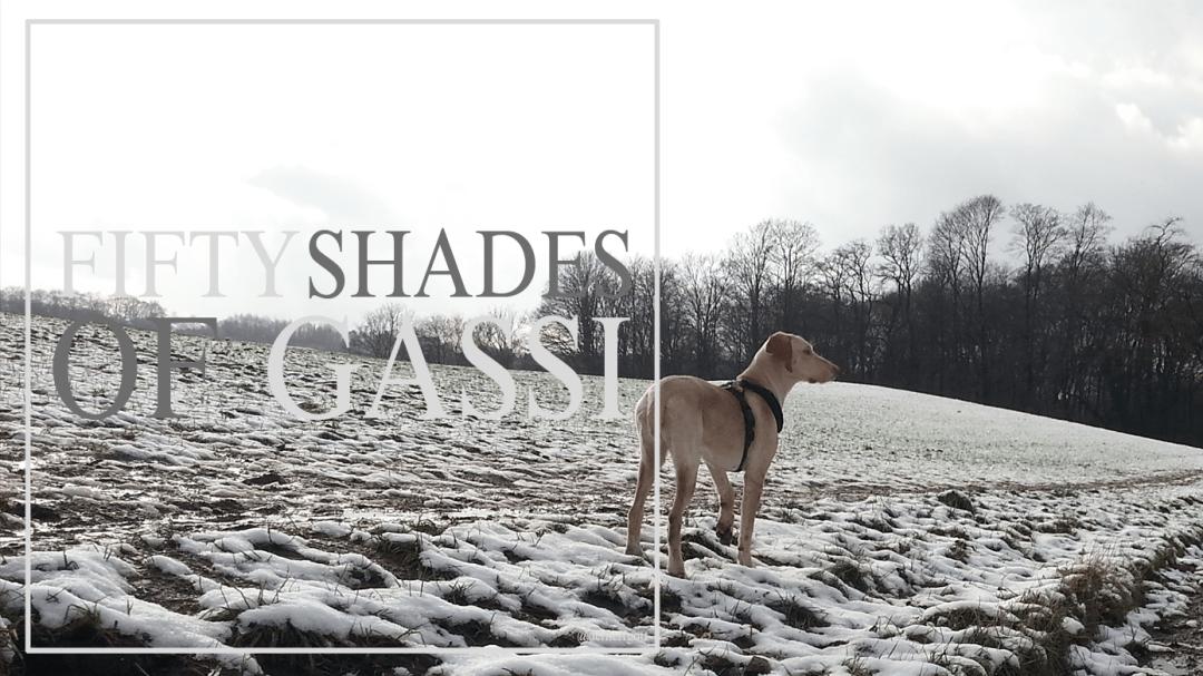 50 shades of gassi start