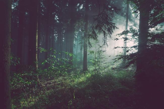 Planete puster karbon (CO2) og puster ut oksygen (O2) som vi puster. Hvorfor skal vi fjerne CO2 som er en livsviktig gass for oss?